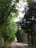 Vägen bland gröna träd arkivfoto