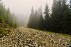 vägen bland sörjer träd är borttappad i dimman Arkivbild