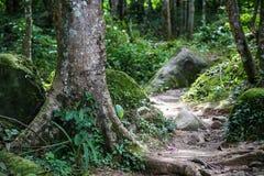 Vägen går till skogen royaltyfri bild