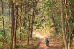Vägen gick in i skogen med stora träd vägen. Arkivbilder