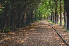 Vägen i botaniska trädgården parkerar arkivfoton