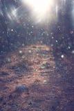 Vägen i den bearbetade skog- och ljusbristningen avbildar som fantasi eller magiskt begrepp royaltyfria bilder