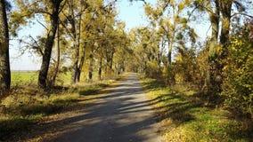 Vägen i den gula höstskogen med gränden