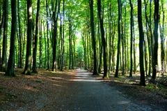 Vägen i en skog i solsken Royaltyfri Fotografi