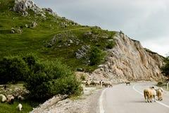 Vägen i Montenegro Arkivfoto