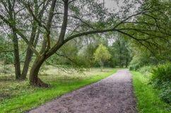 Vägen i parkera Arkivbild
