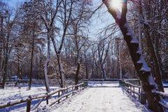 vägen i parkerar exponerat av solen under snön arkivfoto
