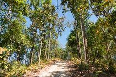 Vägen i skog har solskuggaträd. Royaltyfri Fotografi