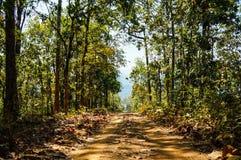 Vägen i skog har solskuggaträd Arkivbild