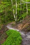 Vägen i skogen arkivbild