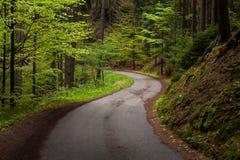 Vägen i skogen royaltyfria bilder