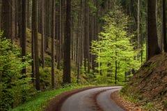 Vägen i skogen royaltyfri foto