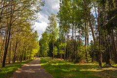 Vägen i skogen arkivbilder