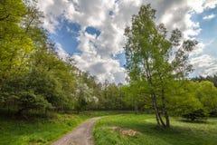 Vägen i skogen arkivfoto