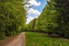 Vägen i skogen fotografering för bildbyråer