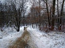 Vägen i vinter parkerar Royaltyfri Foto