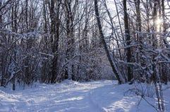 Vägen i vinterträt i en cleaar solig dag Royaltyfri Fotografi