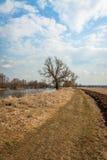Vägen längs fälten arkivbilder