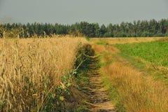Vägen längs fältet Royaltyfri Bild