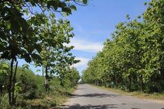 Vägen med träden och den blåa himlen Royaltyfria Bilder