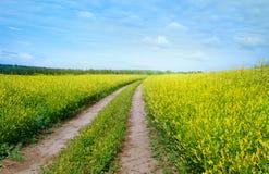 Vägen mellan de guld- fälten Royaltyfri Bild