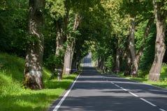 Vägen mellan gamla träd i Europa Arkivfoton