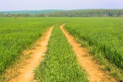 Vägen på fältet Arkivfoton