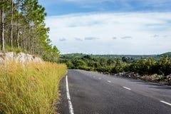 Vägen på kanten av skogen Arkivfoto