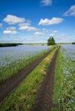 Vägen som går till och med fälten av att blomma lin, blå himmel, blåa blommor arkivfoto
