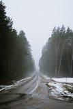 Vägen som leder till den mystiska skogen Royaltyfri Bild
