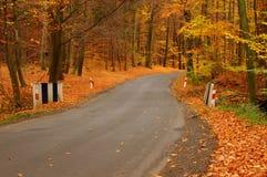 Vägen till och med den höstliga skogen. Royaltyfri Fotografi