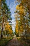 Vägen till och med den soliga skogen arkivbild