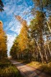 Vägen till och med den soliga skogen arkivfoto