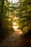 Vägen till och med en solig gränd till havet på solnedgången Royaltyfri Bild