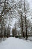 Vägen till och med parkera i vinter Arkivfoto