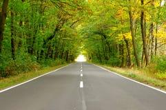 Vägen till och med skogen. Arkivbilder