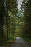 Vägen till och med skogen Royaltyfria Foton