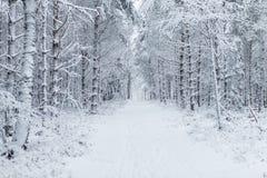 Vägen till och med skogen fyllde med spår i snön Royaltyfri Fotografi