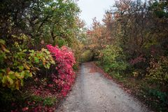 Vägen till skogen vägen till trädgården royaltyfri foto