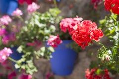 Vägg alldeles av fäste blåa blomkrukor royaltyfri bild