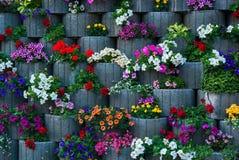 Vägg av blommor Royaltyfria Foton