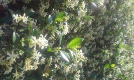 Vägg av blommor Royaltyfri Fotografi