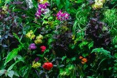 Vägg av blommor Arkivbild