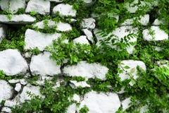 Vägg av den vita stenen med sidor och växter Royaltyfri Fotografi