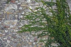 Vägg av ett gammalt murverk Royaltyfria Bilder
