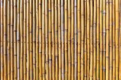 Vägg av gul bambu Royaltyfri Fotografi