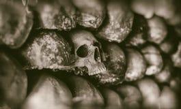 Vägg av skallar fotografering för bildbyråer