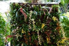 Vägg av tropiska orkidér Royaltyfria Bilder