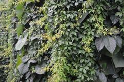 Vägg av växter Royaltyfri Foto
