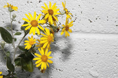 vägg för 3 blommor Arkivbild